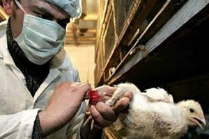 Южная Корея ввел запрет на импорт птицы из Франции