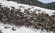 На Ямале откроют три новых комплекса по заготовке оленины
