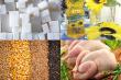 В этом году экспорт тамбовской продукции АПК превысил 264 миллиона долларов США