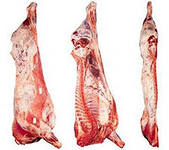 от Производителя продажа охлажденной говядины и телятины