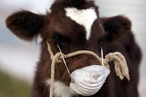 В муниципальных районах Татарстана отменены ограничения по туберкулезу крупного рогатого скота