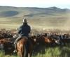 Аргентина попытается восстановить свое присутствие на мировом рынке говядины