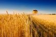 В 2018 году Россия может собрать 110,6 млн тонн зерна - Минсельхоз