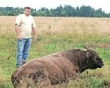 Мраморное мясо Костромской губернии
