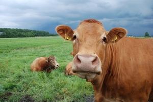 Ученые: нехватка фосфора приведет к ухудшению лугов, а это в свою очередь отразится на питании скота