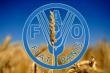 ФАО заключила донорское соглашение с «ФосАгро» на $1,2 млн