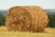 Сельхозпроизводители Приморья приступили к заготовке кормов