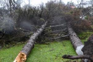 Миллионный ущерб принес ураган сельхозпредприятиям Сахалина