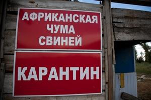 В Рязанской области установлен карантин по АЧС