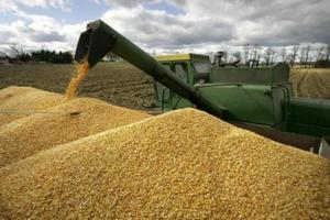 Правительство не приняло решения по экспортной пошлине на зерно
