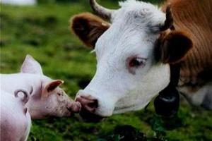 В Харьковской области строят два молочных комплекса и крупную свиноферму
