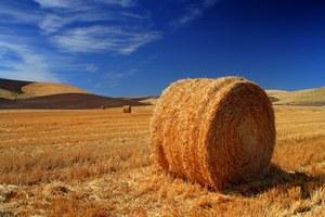 Россия накормит сеном северокорейскую скотину