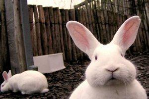 Глава Тамбовской области побывал на кролиководческой ферме в селе Кулеватово