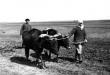 И тыл был фронтом… Животноводство в годы Великой Отечественной войны