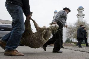 В Набережных Челнах планируют открыть комплекс для ритуального забоя скота