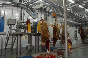 Новый современный пункт для убоя крупного рогатого скота и свиней открылся в Башкирии