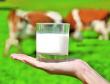 Производство молока в сельхозорганизациях увеличилось на 5,4%