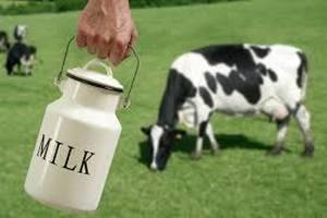 Европарламент просит больше денег на спасение «молочников»