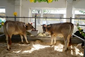 За год в Локтевском районе Алтайского края построили шесть помещений для мясного скота