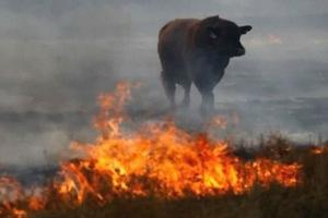 Стадо телят и коров спасли пожарные от огня под Смоленском