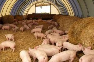 Литва наращивает экспорт свинины