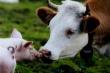Итоги еженедельного мониторинга ситуации на агропродовольственном рынке по состоянию на 19.06.2017