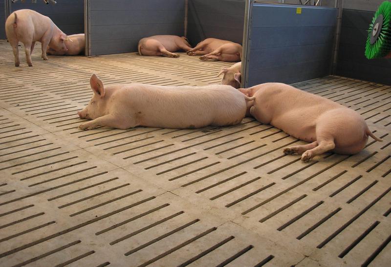 Щелевые полы для животноводческих комплексов