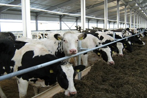 В Старожиловском районе Рязанской области построили крупный животноводческий комплекс