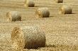В Татарстане заготовлено около 500 тыс. тонн сена и 2 млн. тонн сенажа