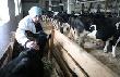 Ленобласть в 2012 году выделит 350 миллионов на субсидии сельскому хозяйству