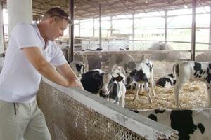 Красноярское хозяйство «Победа» решило восстановить животноводческую ферму