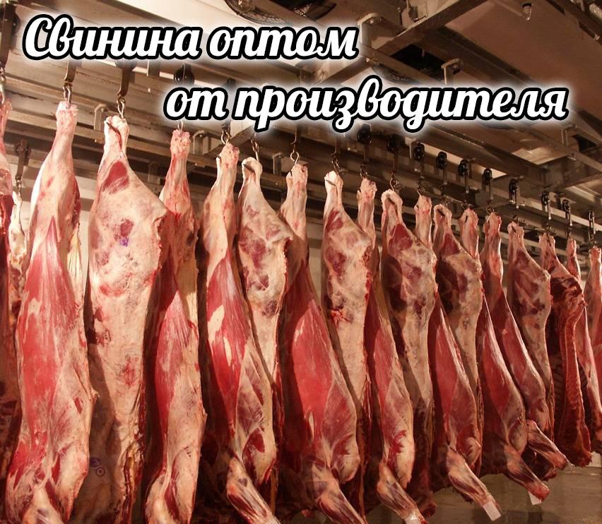 Мясо свинина оптом от производителя