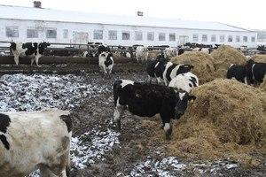 Животноводческая ферма неправомерно загрязнила территорию деревни