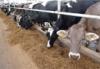 Стимулировать фермеров и развивать мелиорацию