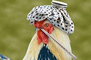 Россельхознадзор выражает обеспокоенность в связи с ситуацией с высокопатогенным гриппом птиц во Франции