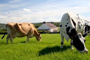 В Казахстане завершено строительство откормочной площадки на 3000 голов скота