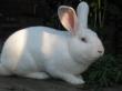 В Щербиновском районе Кубани открылась кролиководческая ферма