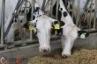 Пензенские животноводы существенно увеличили производство мяса