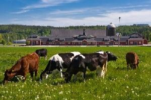 В 2015-м Воронежская область наращивала объемы сельхозпроизводства