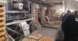 В Пензенской области открыли птицеводческий цех, оснащенный отечественным оборудованием