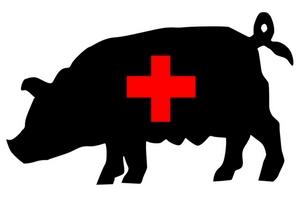 Вирус эпидемической диареи свиней расползается по миру в пакетах