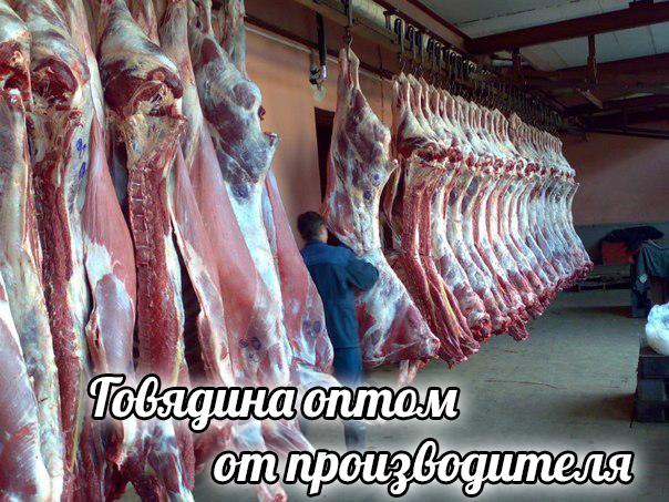 Мясо говядины оптом от производителя