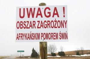 Новая вспышка АЧС в Польше поразила более 8000 свиней