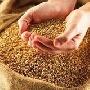 Мировые цены на зерно в следующем году будут высокими