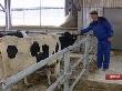 Липецкие аграрии не останутся без поддержки государства