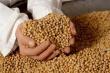 Турция наращивает импорт сои под влиянием растущего спроса на мясо птицы