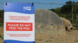Национальная ассоциация свиноводов Великобритании требует усиления контроля за АЧС на границе