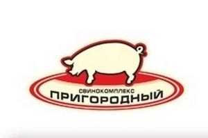 В «СК Пригородный» были изысканы средства для закупки достаточного количества корма для свиней