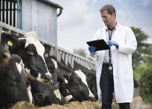 Убытки от вирусных болезней животных превышают 2,3 млрд рублей в год — Минсельхоз