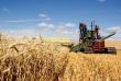 Пшеница подсыхает. Аналитики снижают прогнозы сбора зерна в 2019 году